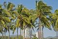 Palm trees fronting residential high rise with rises in background pacific ocean coast mexico Royalty Free Stock Photos