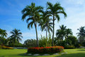 Palm trees in a garden Royalty Free Stock Photo