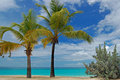 Palm trees on Grand Anse beach on Grenada Island Stock Photography