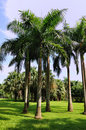 Palm trees and grass land in sun shine Royalty Free Stock Image