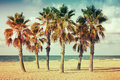 Palm trees grow on empty sandy beach in spain vintage style photo with old style colorful retro tonal photo filter correction Stock Photography