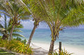 Palm Trees with Hammock on Tropical Beach Royalty Free Stock Photos