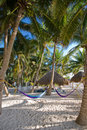 Palm trees and hammocks at a resort Royalty Free Stock Photo