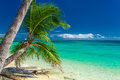 Palm trees hanging over tropical beach in fiji on islands Royalty Free Stock Image