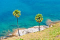 Palm trees on the island of phuket set among Royalty Free Stock Images