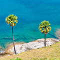 Palm trees on the island of phuket set among Stock Photos