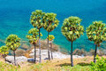 Palm trees on the island of phuket set among Stock Image