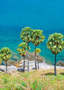 Palm trees on the island of phuket set among Stock Photo