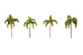 Palm trees isolated on white four background Royalty Free Stock Photos