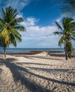 Palm trees on Key West. Beautiful fine sand beach with blue ocean in background Royalty Free Stock Photo