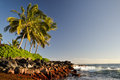 Palm trees at Lawai Beach - Poipu, Kauai, Hawaii, USA Royalty Free Stock Photo