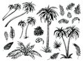 Palm trees and leaves. Black line silhouettes. Vector sketch illustration.