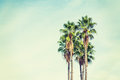 Palm trees in Los Angeles in vintage tone Royalty Free Stock Photo