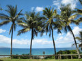 Palm Trees in Maui Stock Photography
