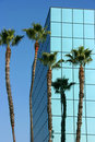 Palm trees and modern architecture Royalty Free Stock Photo