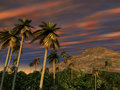 Palm Trees Mountain Sunset Royalty Free Stock Images