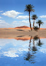 Palm Trees near the Lake in the Sahara Desert Royalty Free Stock Photos