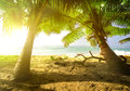 Palm trees and ocean Royalty Free Stock Photo