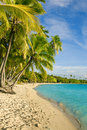 Palm trees over tropical lagoon at fiji islands Royalty Free Stock Photography