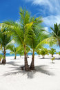 Palm trees on paradise island bantayan philippines Royalty Free Stock Photos