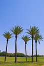 Palm trees in the park Royalty Free Stock Photo