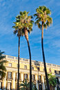 Palm trees at Placa Reial, Barcelona Royalty Free Stock Images