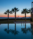 Palm trees and the pool Royalty Free Stock Photo