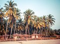 Palm trees and reed huts on a beach at sunset goa india Royalty Free Stock Photo