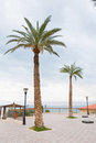 Palm trees in resort on Dead Sea Stock Photography