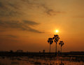Palm trees rice field sunset Stock Photos