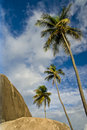 Palm Trees on the Rocks Royalty Free Stock Image