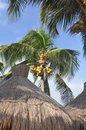 Palm trees and roofs from a grass. Royalty Free Stock Photos