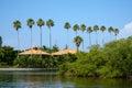 Palm Trees Row