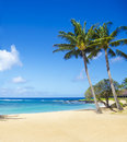 Palm trees on the sandy beach in hawaii coconut tree poipu kauai Stock Image