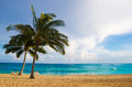 Palm trees on the sandy beach in hawaii coconut tree poipu kauai Stock Photography