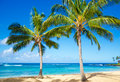 Palm trees on the sandy beach in hawaii coconut tree poipu kauai Royalty Free Stock Photos