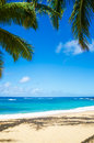 Palm trees on the sandy beach in hawaii coconut tree poipu kauai Stock Photo