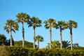 Palm trees at Santa Monica beach. Royalty Free Stock Photo