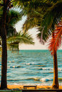 Palm trees on sea background Stock Photos