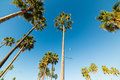 Palm trees and seagulls in Venice beach Royalty Free Stock Photo