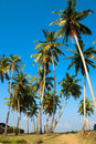 Palm trees at the seashore in sri lanka Stock Image