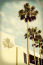 Palm Trees and Shadow Royalty Free Stock Photo