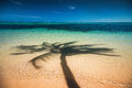 Palm trees shadow on the tropical beach Punta Cana, Dominican Re Royalty Free Stock Photo