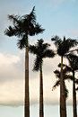 Palm trees silhouette Royalty Free Stock Photos