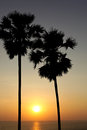 Palm trees silhouette at sunset Royalty Free Stock Image