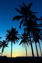 Palm trees silhouette with sunset on beautiful background Stock Images
