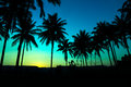 Palm trees silhouette with sunset on beautiful background Stock Photo