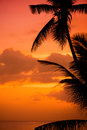 Palm trees silhouette at sunset tropical beach. Orange sunset. Royalty Free Stock Photo