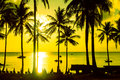 Palm trees silhouette at sunset on tropical island Royalty Free Stock Photo