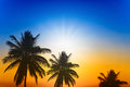 Palm trees silhouette on sunset Royalty Free Stock Photo